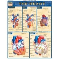 Planche illustree sur le Coeur