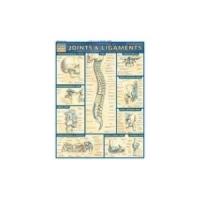 Planche Ligaments et Articulations